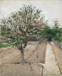 Apple Tree in Bloom (Pommier en fleurs)