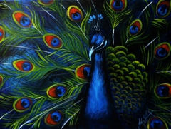 Peacock on Blue